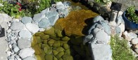 Natural waterpool landscape